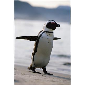 google penguin and ecommerce